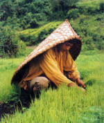 Meghalaya Agriculture